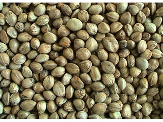 Organic Hemp Seeds 500g